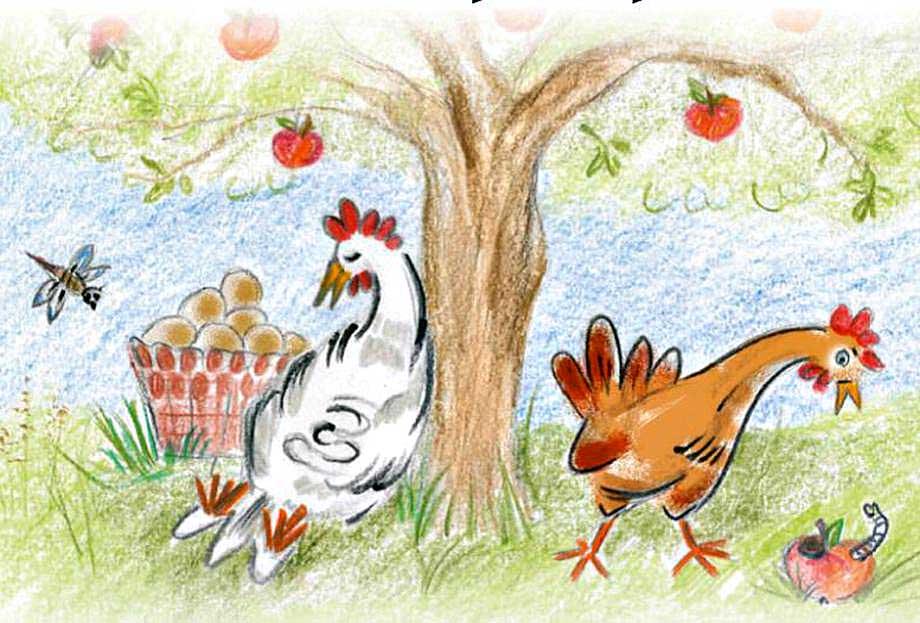 Permalink auf:Weidehuhn-Eier