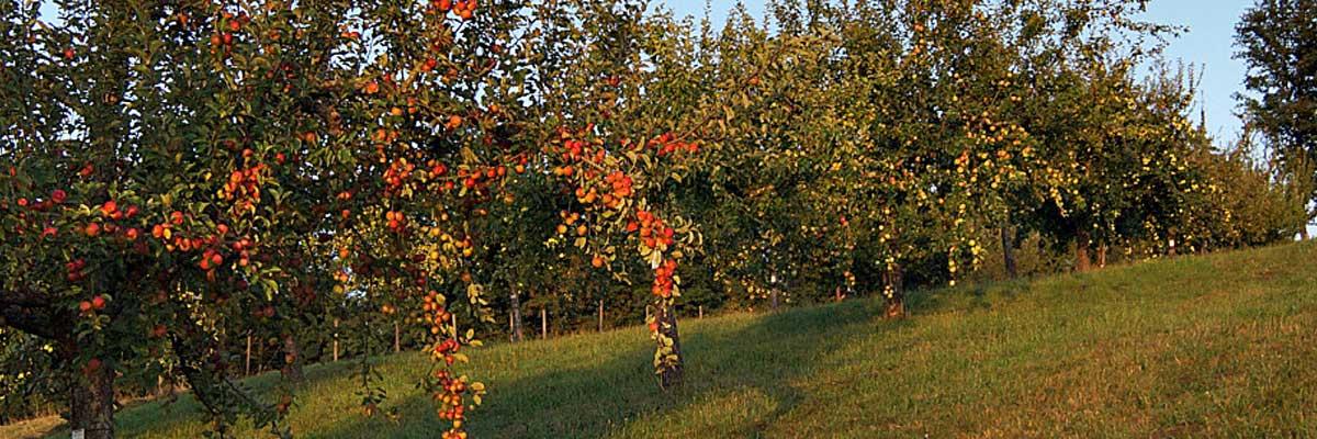 Permalink auf:Obst und Säfte nach Saison